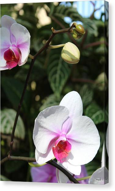 Orchid Three Canvas Print by Mark Steven Burhart