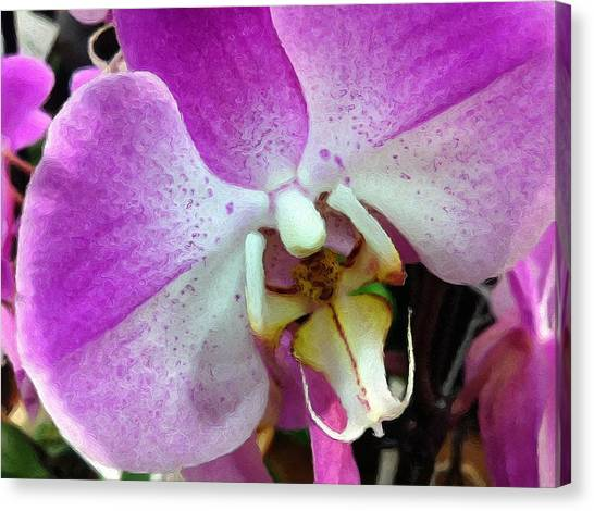 Orchid Throat Canvas Print by Lyn Pacific
