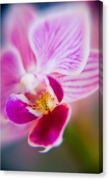 Orchide Detail 2 Canvas Print by Kim Lagerhem