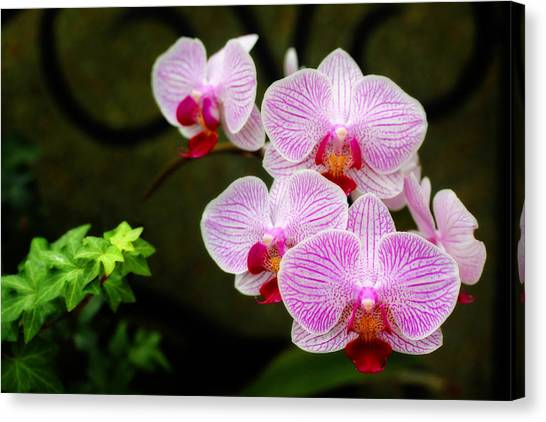 Orchids And Ivy Canvas Print