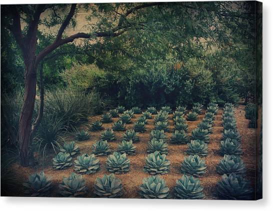 Mirage Canvas Print - Order by Laurie Search