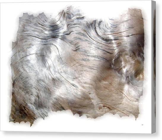 Oregon Driftwood Canvas Print
