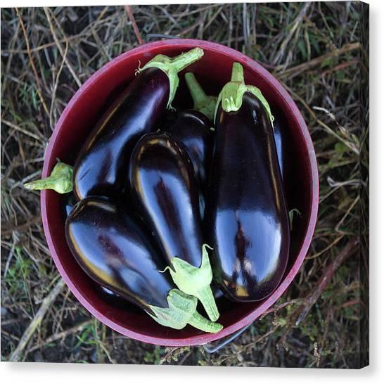 Organic Eggplant Canvas Print