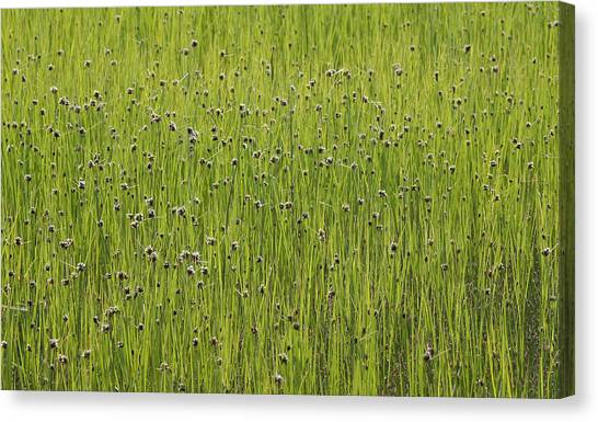 Organic Green Grass Backround Canvas Print