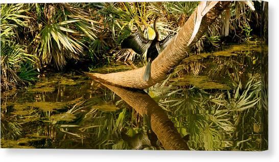 Anhinga Canvas Print - Oriental Darter Anhinga Melanogaster by Panoramic Images
