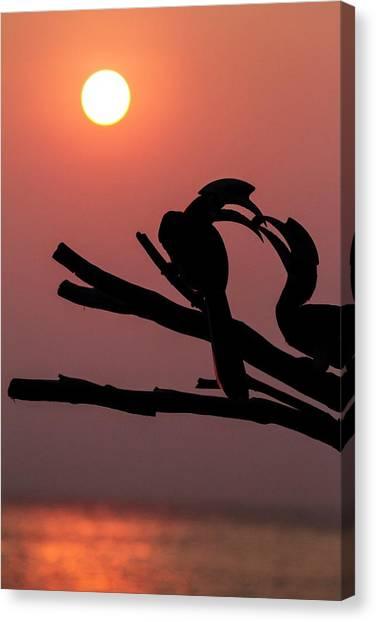 Hornbill Canvas Print - Oriental Pied Hornbills by Paul Williams