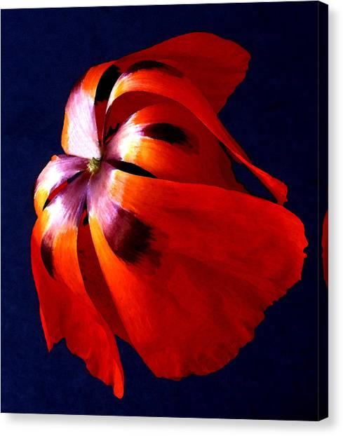 Oriental Poppy I Canvas Print