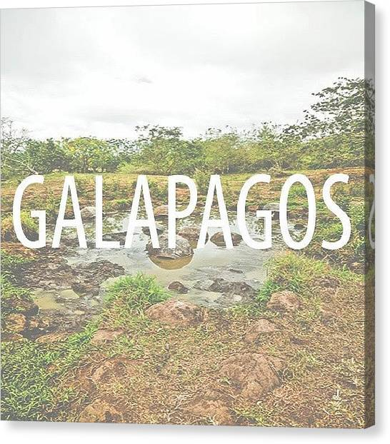 Tortoises Canvas Print - Origins.... #galapagos #wildearth by M H