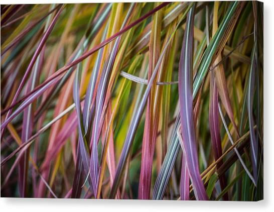 Ornamental Grass Canvas Print