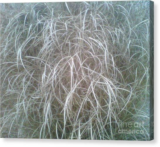 Ornamental Grasses 1 Canvas Print