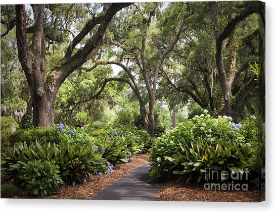 Orton Plantation Scenic Walkway Brusnwick County Nc Canvas Print
