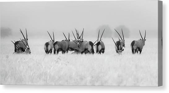 Kalahari Desert Canvas Print - Oryx In The Rain by Kirill Trubitsyn