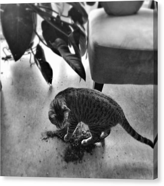 Oskar In Trouble Canvas Print by Mick Szydlowski