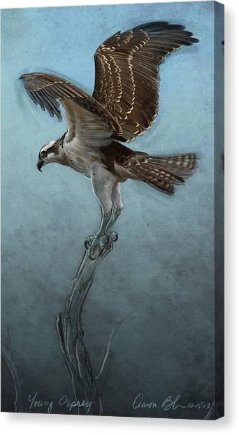 Hawks Canvas Print - Osprey by Aaron Blaise