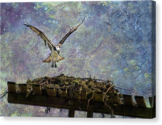 Canvas Print featuring the photograph Osprey-coming Home by Belinda Greb