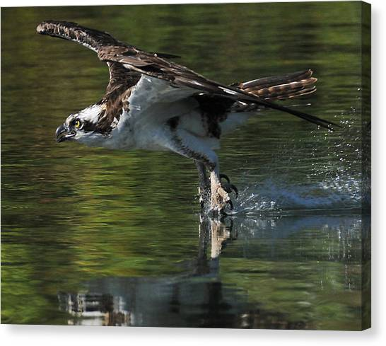 Osprey Hunter Canvas Print by Kenneth Haley