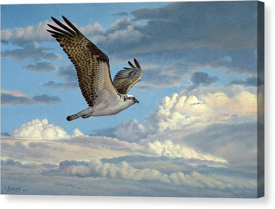 Hawks Canvas Print - Osprey In The Clouds by Paul Krapf