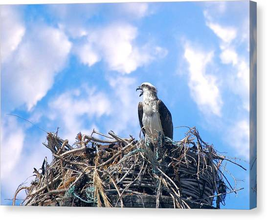 Canvas Print featuring the photograph Osprey On Nest by David Rich