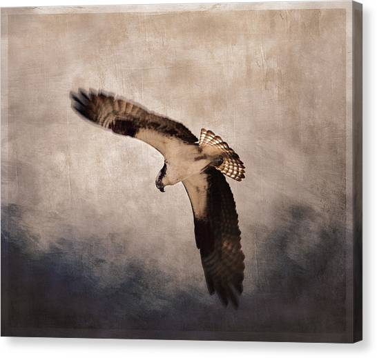 Osprey Canvas Print - Osprey Over The Columbia River by Carol Leigh