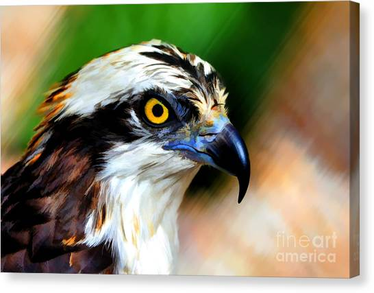 Osprey Portrait Canvas Print