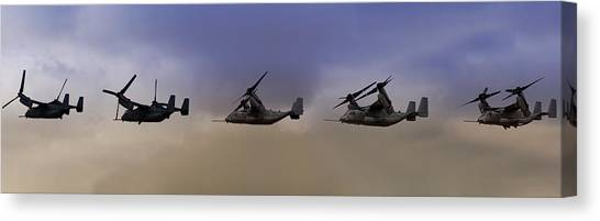 Osprey Transformation Canvas Print