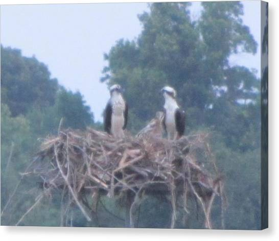 Osprey's Chatting On The Chesapeake Bay Canvas Print by Debbie Nester