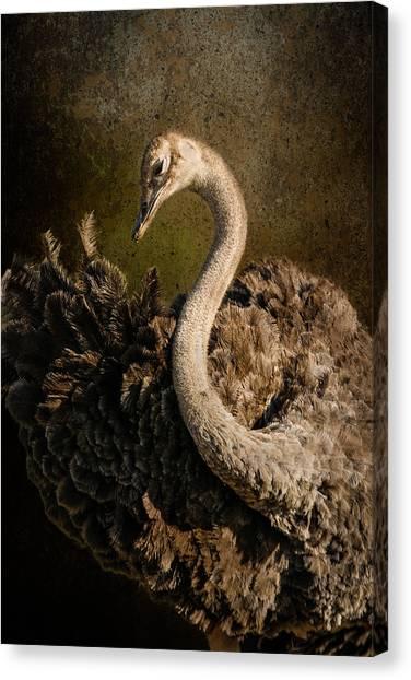 Rhinocerus Canvas Print - Ostrich Ballet by Mike Gaudaur