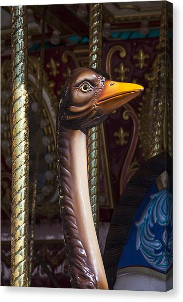 Ostriches Canvas Print - Ostrich Carrousel Ride by Garry Gay