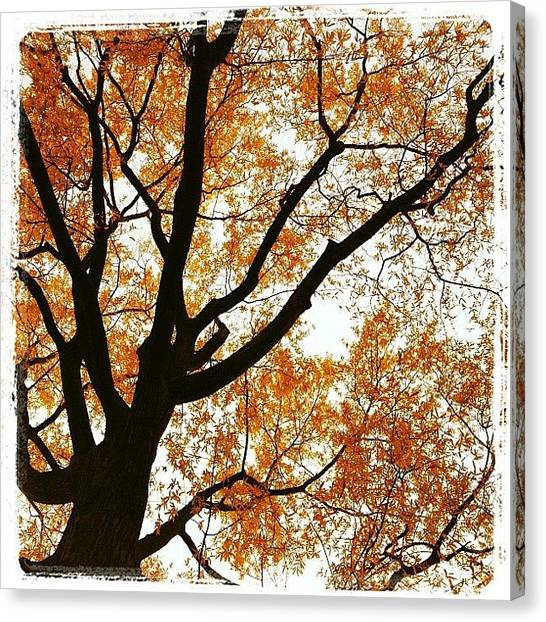 Orange Tree Canvas Print - #otoño #fall #orange #tree by Angel Arroyo