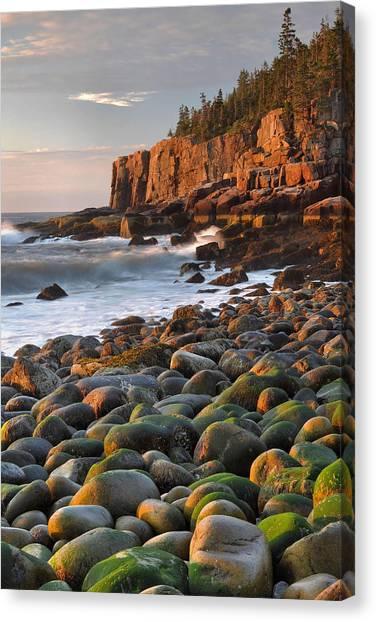 Otter Cliffs At Sunrise Canvas Print