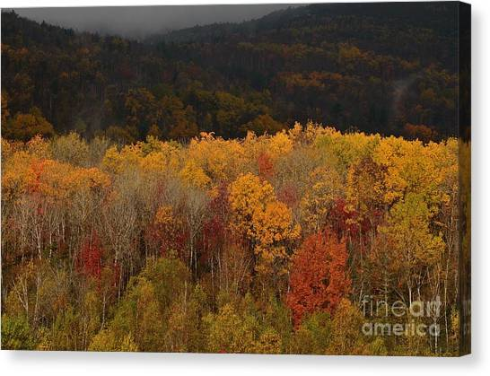 Otter Creek Road Canvas Print
