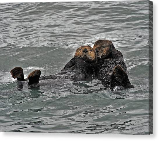 Otter Love Canvas Print by David Marr