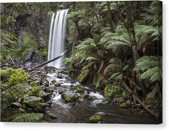 Great Otway National Park Canvas Print - Otway Beauty by Shari Mattox