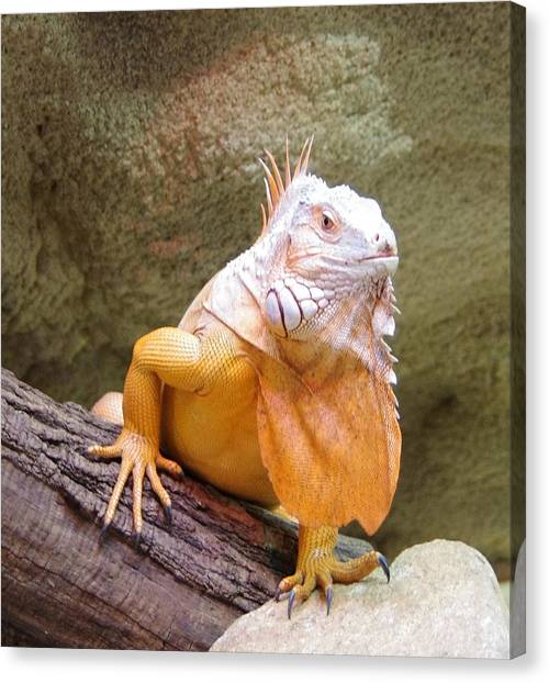 Out Of Africa Orange Lizard 1 Canvas Print