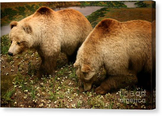 Out Of Hibernation Canvas Print