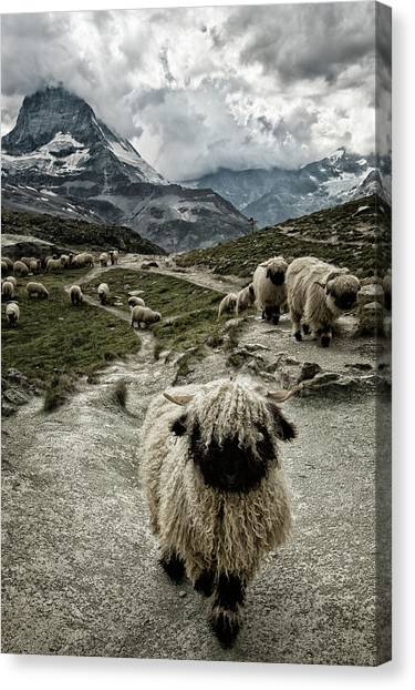 Matterhorn Canvas Print - Out Of My Way by Susanne Landolt