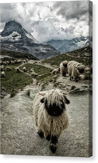 Matterhorn Canvas Print - Out Of My Way by Susanne Landolt