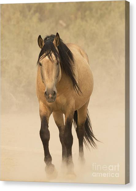 Wash Basins Canvas Print - Out Of The Dust by Carol Walker