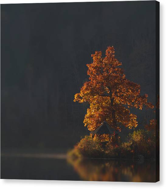 Orange Tree Canvas Print - Outlook by Nathan Larson