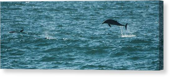 Bottlenose Dolphins Canvas Print - Overdrive by Alistair Lyne