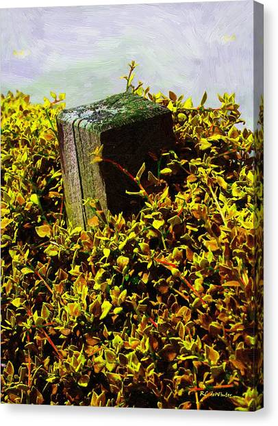 Buried Canvas Print - Overgrown by RC deWinter