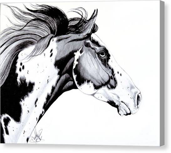 Overo Paint Horse Canvas Print