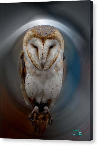 Owl Alba  Spain  Canvas Print