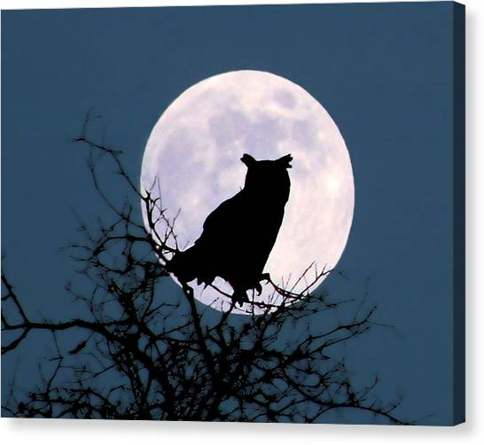 Owl And Blue Moon Canvas Print