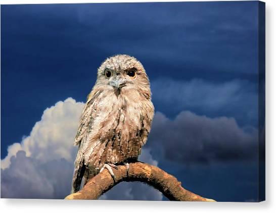 Owl At Dusk Canvas Print