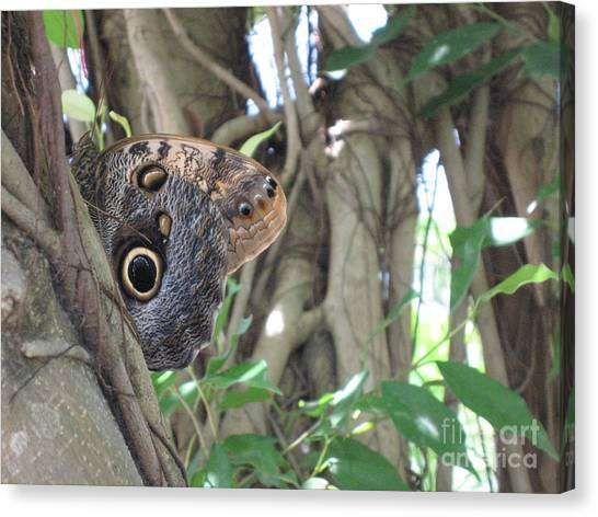 Owl Butterfly In Hiding Canvas Print