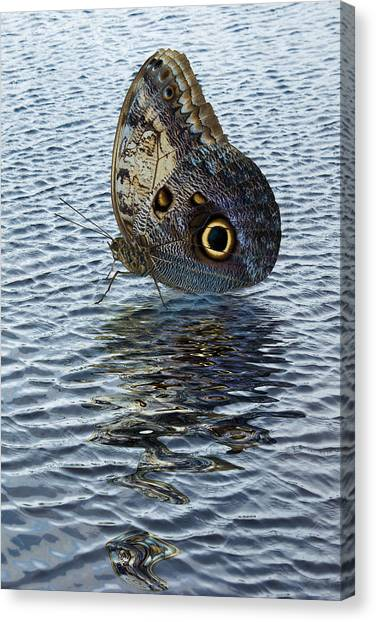 Owl Butterfly On Water Canvas Print