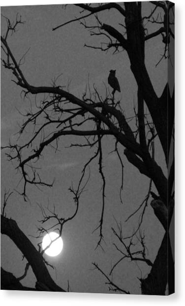 Owl By Night Canvas Print