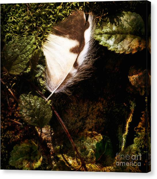 Owl Feather On Natures Canvas In Square Canvas Print by Lee Craig