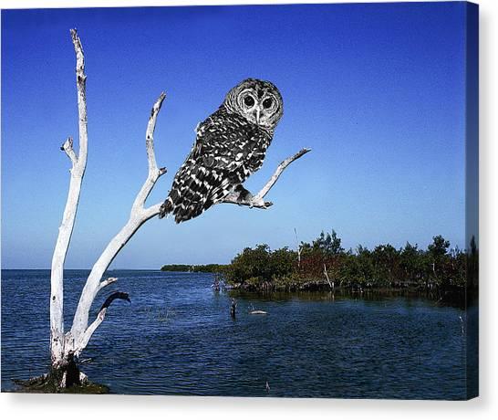 Owl In Dead Tree Canvas Print by Fred Leavitt